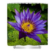 Purple Water Lily Shower Curtain by Ray Laskowitz - Printscapes