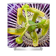 Radial Arms Shower Curtain by Christopher Holmes