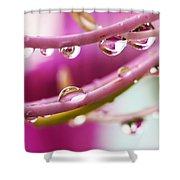 Raindrops Shower Curtain by Marilyn Hunt