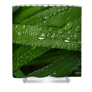 Raindrops On Green Leaves Shower Curtain by Carol Groenen