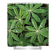 Raindrops On Lupine Shower Curtain by Greg Vaughn - Printscapes