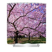 Rapt Away Shower Curtain by Mitch Cat