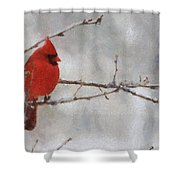 Red Bird of Winter Shower Curtain by Jeff Kolker