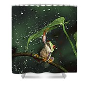 Red-eyed Tree Frog In The Rain Shower Curtain by Michael Durham