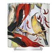 Red Hawaiian Honeycreeper Shower Curtain by Hawaiian Legacy Archive - Printscapes