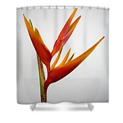 Red Heliconia Shower Curtain by Tomas del Amo - Printscapes