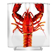 Red Lobster - Full Body Seafood Art Shower Curtain by Sharon Cummings