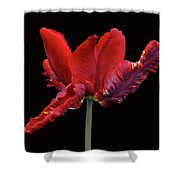 Red Parrot Tulip Shower Curtain by Sandy Keeton