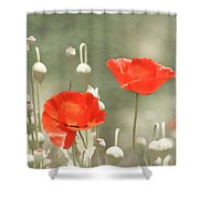 Red Poppies Shower Curtain by Kim Hojnacki