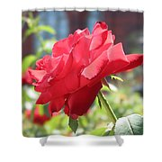 Red Rose Shower Curtain by Brian McDunn