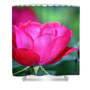 Red Rose Shower Curtain by Teresa Mucha