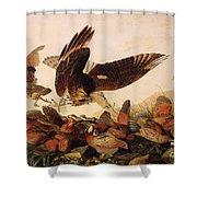 Red Shouldered Hawk Attacking Bobwhite Partridge Shower Curtain by John James Audubon