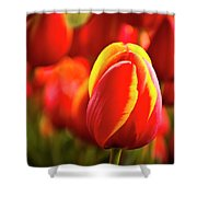 Red Tulip Shower Curtain by Tamyra Ayles