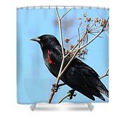 Red-Winged Blackbird . 40D5718 Shower Curtain by Wingsdomain Art and Photography