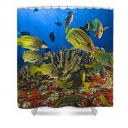 Reef Scene Shower Curtain by Dave Fleetham - Printscapes