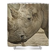 Rhino Shower Curtain by Michael Peychich