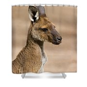 Roo Portrait Shower Curtain by Mike  Dawson