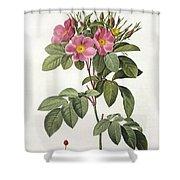 Rosa Carolina Corymbosa Shower Curtain by Pierre Joseph Redoute
