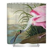 Roseate Spoonbill Shower Curtain by John James Audubon