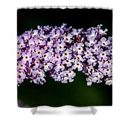 Rows And Flows Of Angel Flowers Shower Curtain by John Haldane