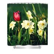 Royal Spring Shower Curtain by Steve Karol