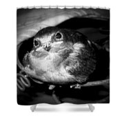 Rusted Perch - Baby Barn Swallow  Shower Curtain by Christena  Stephens