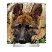 Sable German Shepherd Puppy Shower Curtain by Sandy Keeton
