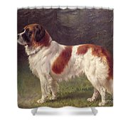 Saint Bernard Shower Curtain by Heinrich Sperling