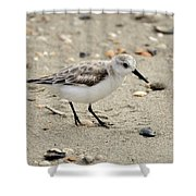 Sanderling Shower Curtain by Al Powell Photography USA
