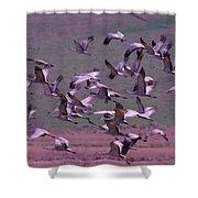Sandhill Cranes  Shower Curtain by Jeff Swan