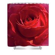 Scarlet Rose Flower Shower Curtain by Jennie Marie Schell
