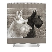 Scottish Terrier Dogs In Sepia Shower Curtain by Jennie Marie Schell