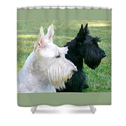 Scottish Terrier Dogs Shower Curtain by Jennie Marie Schell