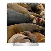 Sea Lions At Pier 39 San Francisco Shower Curtain by Sebastian Musial