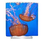 Sea Nettles Chrysaora Fuscescens In Shower Curtain by Stuart Westmorland