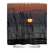 Sea Oats Shower Curtain by David Lee Thompson