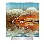 Seashell Reflections On Water Shower Curtain by Kaye Menner