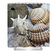 Seashells Shower Curtain by Frank Tschakert