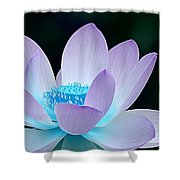 Serene Shower Curtain by Photodream Art
