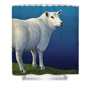 Sheep at the edge Shower Curtain by James W Johnson