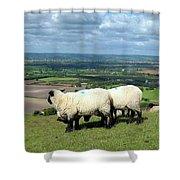 Sheep At Westbury Tor Shower Curtain by Kurt Van Wagner