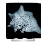 Shell Shower Curtain by Amber Flowers