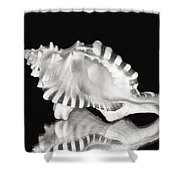 Shell and Reflection Shower Curtain by Bill Brennan - Printscapes
