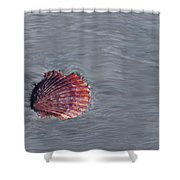 Shell Imprint Shower Curtain by Linda Sannuti