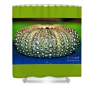 Shell With Pimples Shower Curtain by Kaye Menner