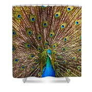 Showing Your Colors Shower Curtain by Mike  Dawson