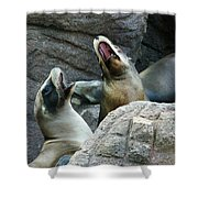 Singing Sea Lions Shower Curtain by Anthony Jones