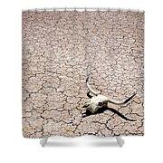 Skull In Desert Shower Curtain by Kelley King
