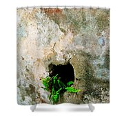 Small Ferns Shower Curtain by Perry Webster