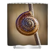 Snail On A Stick Shower Curtain by Kelley King